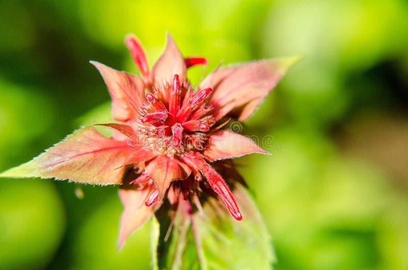 Vista della floricultura rossa in un giardino verde fotografia stock