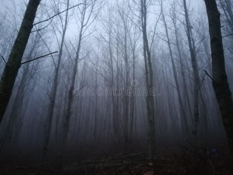 Vista della foresta con molta nebbia immagini stock libere da diritti