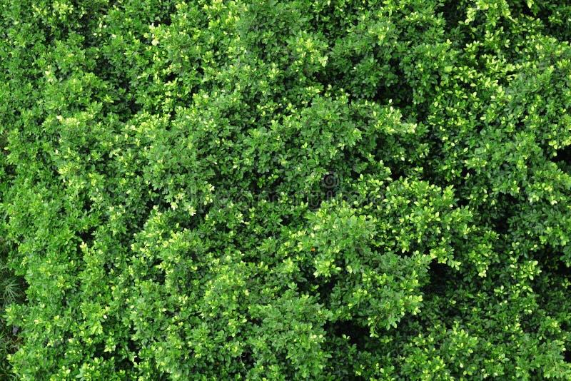 Vista della foresta dalla parte superiore immagine stock libera da diritti
