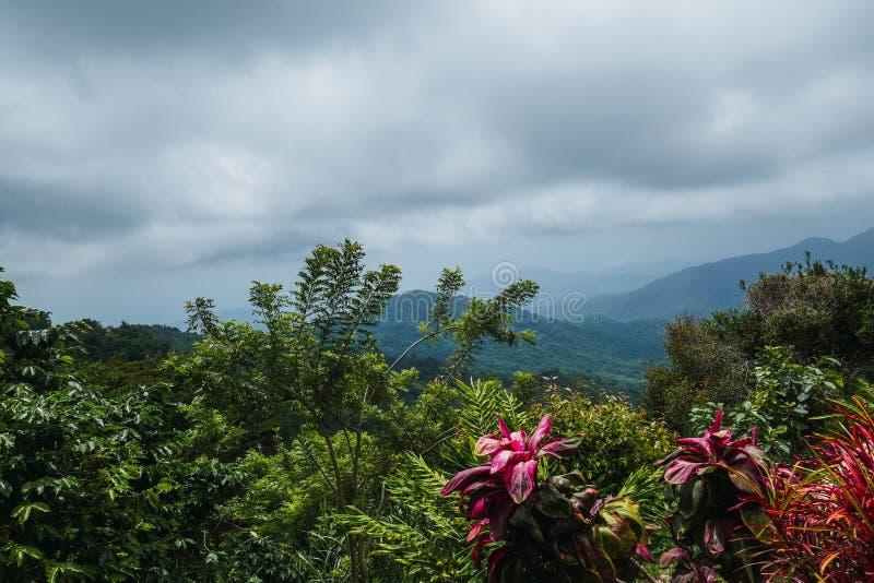 Vista della foresta in Minca fotografia stock libera da diritti