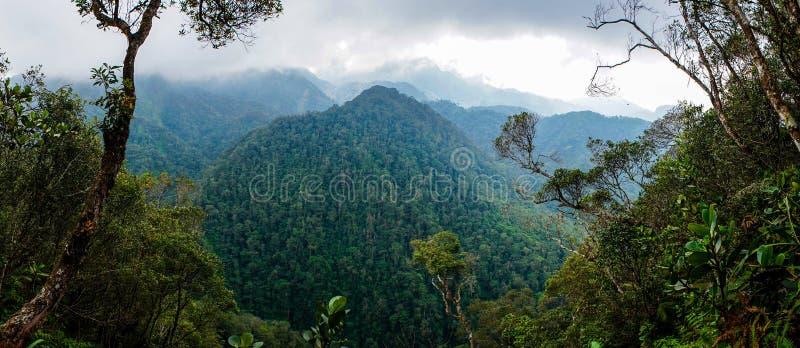 Vista della foresta nel parco nazionale di PANACAM nell'Honduras fotografie stock libere da diritti