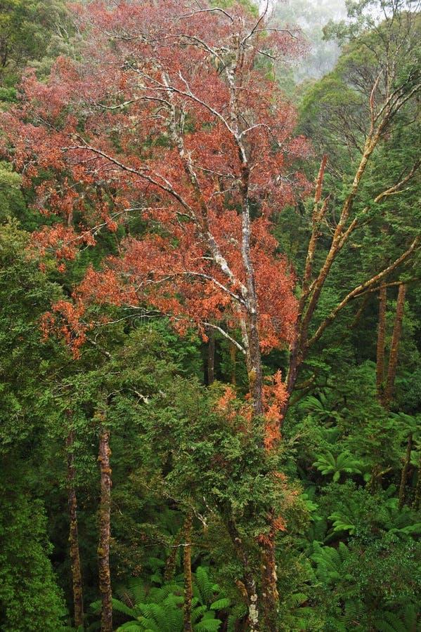 Download Vista Della Foresta Pluviale Fotografia Stock - Immagine di grande, paesaggio: 30828950
