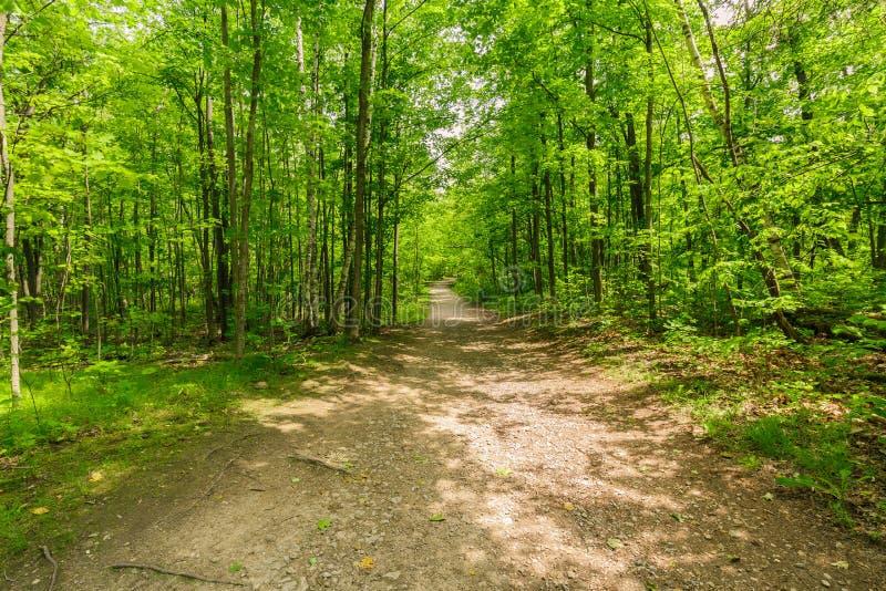 vista della foresta verde fresca naturale con la traccia, percorso, paesaggio in colline di Ontario Halton immagini stock
