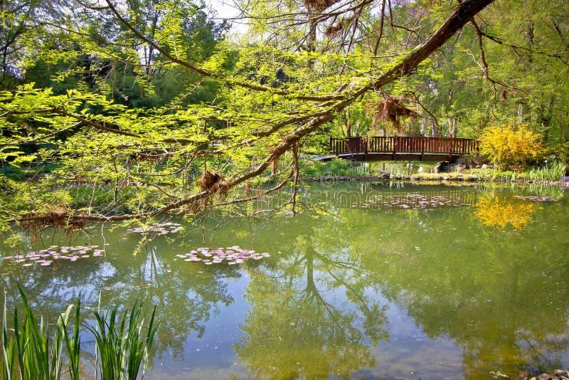 Vista della molla del lago del giardino botanico fotografie stock