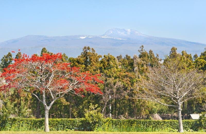 Vista della montagna di Hallasan - simbolo dell'isola di Jeju-Do fotografia stock libera da diritti