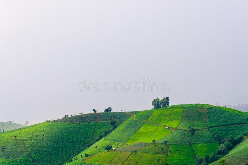 vista della montagna verde del terrazzo delle risaie nella terra w della campagna fotografia stock libera da diritti