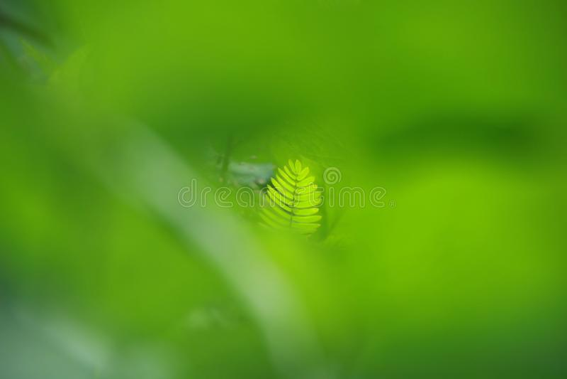 Vista della natura del primo piano della foglia verde in giardino ad estate nell'ambito di luce solare immagine stock libera da diritti