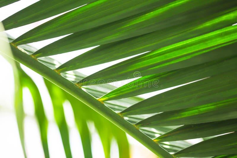 Vista della natura del primo piano della foglia verde Landsca naturale delle piante verdi immagine stock libera da diritti