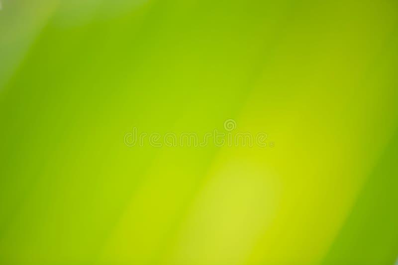 Vista della natura del primo piano della foglia verde della noce di cocco illustrazione di stock