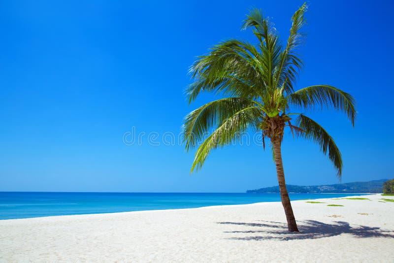 Vista della natura della spiaggia tropicale con una palma sola fotografie stock