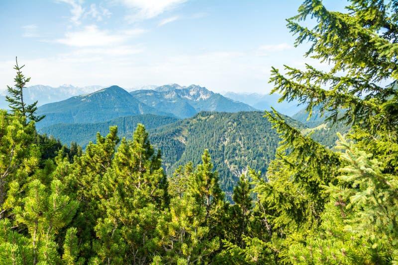 Vista della natura e delle montagne attraverso gli alberi dalla montagna di Herzogstand, Baviera, Germania immagini stock