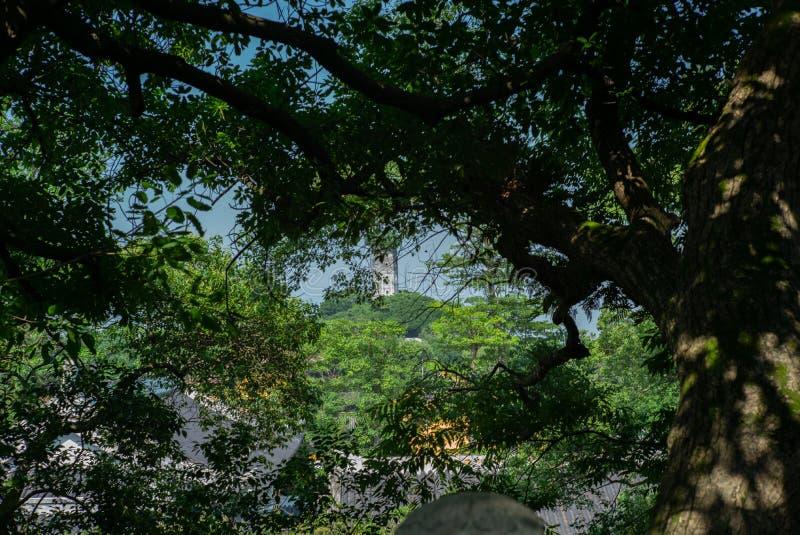 Vista della pagoda orientale sull'isola di Jiangxin in Wenzhou in Cina sopra il tetto delle tempie e degli alberi - 2 fotografia stock libera da diritti