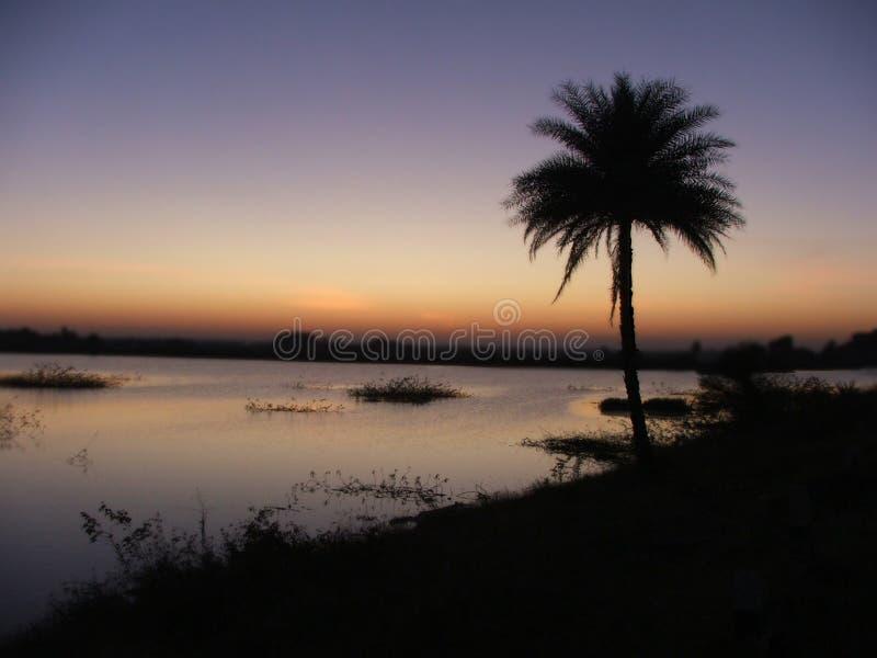 Download Vista Della Palma Durante Il Tramonto Fotografia Stock - Immagine di albero, palma: 3883616