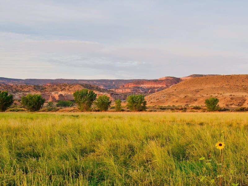 Vista della regione selvaggia del girasole fotografia stock