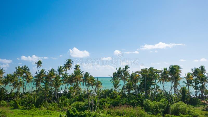 Vista della spiaggia da Punta Tuna Wetlands Nature Reserve - Puerto Rico - U.S.A. immagine stock libera da diritti