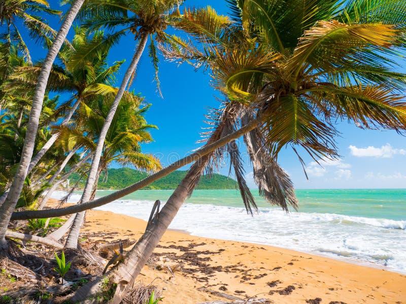 Vista della spiaggia da Punta Tuna Wetlands Nature Reserve - Puerto Rico - U.S.A. fotografie stock libere da diritti