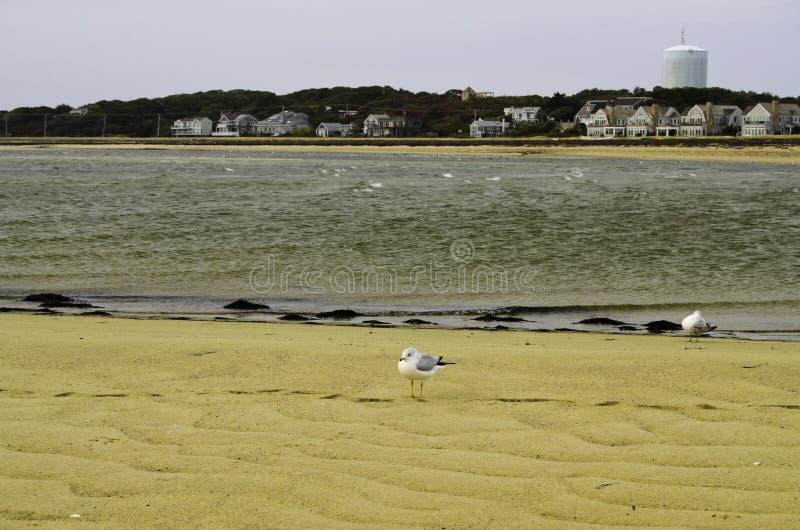 Vista della spiaggia di Cape Cod della città della Provenza fotografia stock