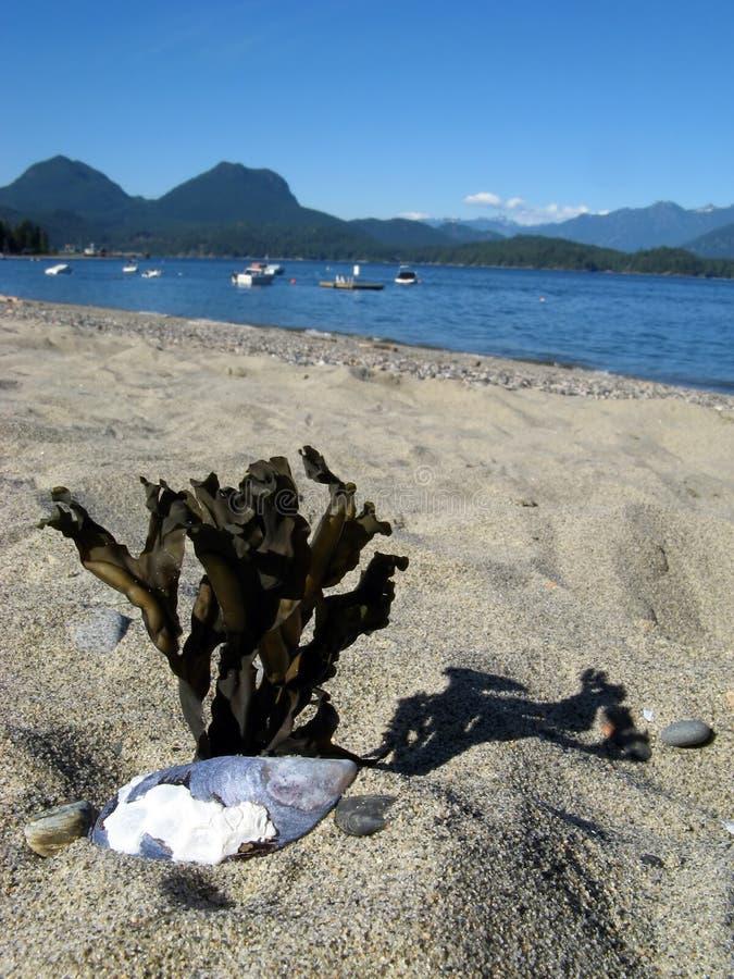 Vista della spiaggia di Gibsons fotografia stock libera da diritti