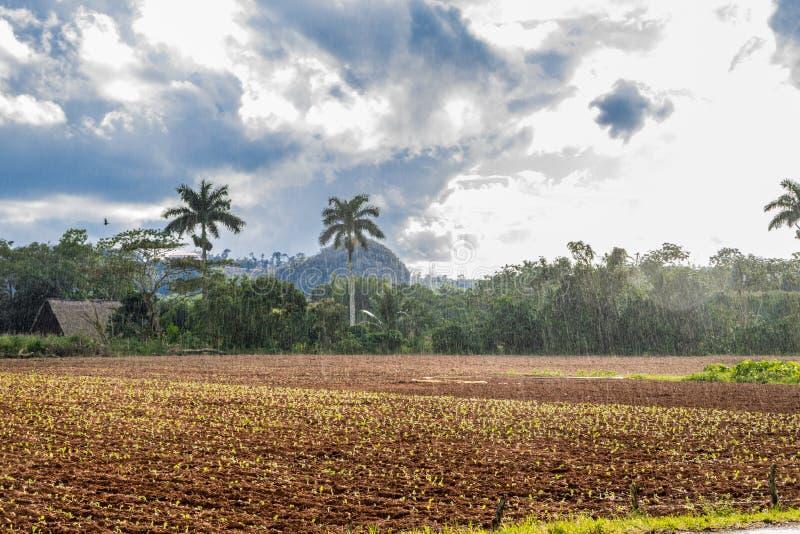 Vista della valle delle birre inglesi del ½ del ¿ di Viï in Cuba Natura irreale con i laghi, montagna, alberi, fauna selvatica Ci fotografia stock libera da diritti