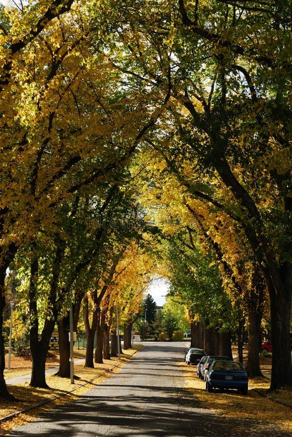 Vista della via di autunno a Edmonton fotografie stock libere da diritti