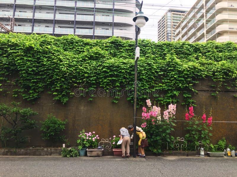 Vista della via della natura di Osaka immagine stock