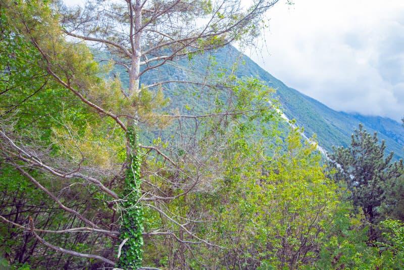 Vista delle montagne vicino al lago Garda immagini stock libere da diritti