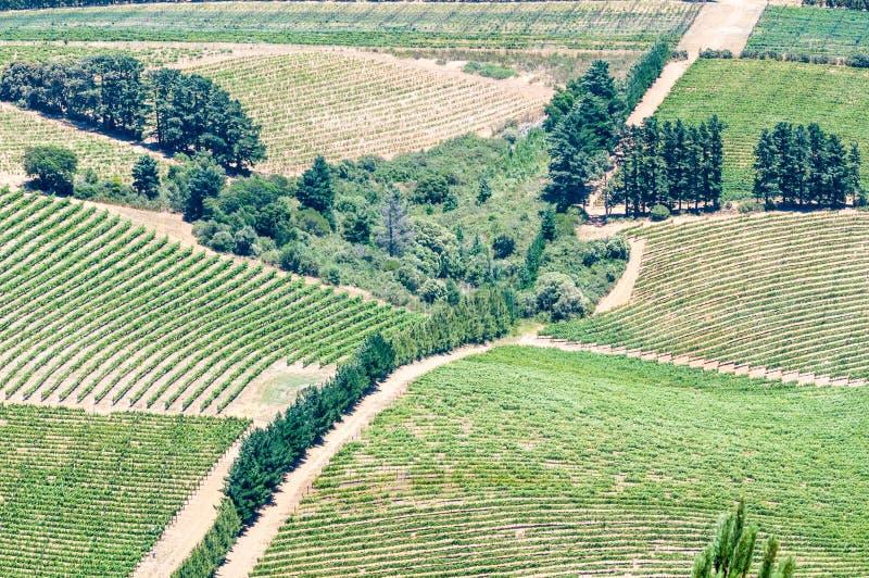 Vista delle vigne vicino a Somerset West, Sudafrica fotografia stock