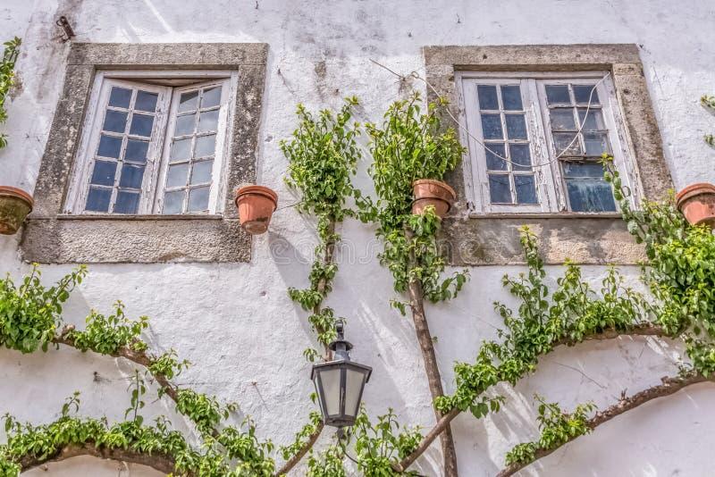 """Vista detalhada de uma fachada vernáculo portuguesa com a planta da escalada em torno das janelas, na vila medieval bidos de à """", fotografia de stock royalty free"""