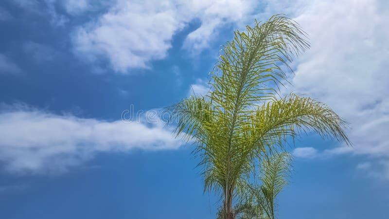 Vista detalhada do palmeiras com o céu azul com nuvens imagem de stock royalty free