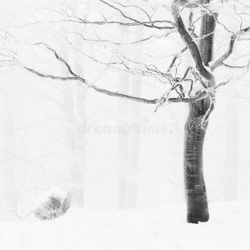 Vista detallada en el árbol congelado fotos de archivo libres de regalías