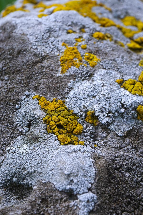 Vista dettagliata della pietra stagionata coperta di licheni gialli e bianchi fotografia stock libera da diritti