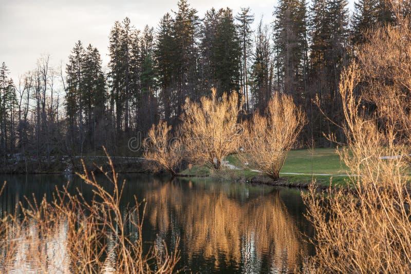 Vista dettagliata sul lago in Preddvor fotografia stock libera da diritti
