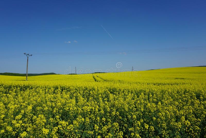 Vista di agricoltura del giacimento del seme di ravizzone, linee elettriche, paesaggio della molla fotografie stock libere da diritti