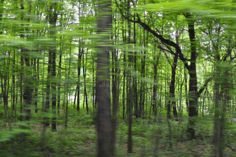Vista di alberi vaga dall'automobile fotografie stock