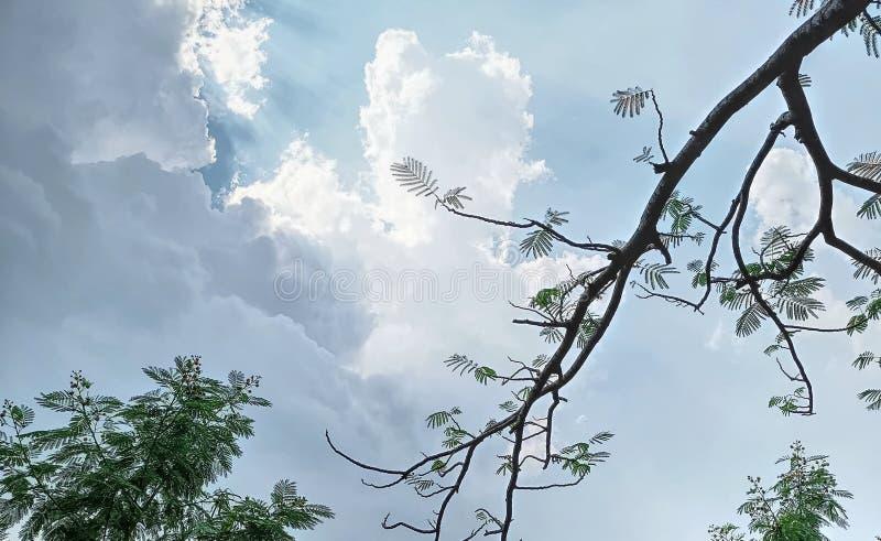 Vista di angolo basso dei rami e delle foglie di albero contro il cielo nuvoloso blu fotografia stock libera da diritti