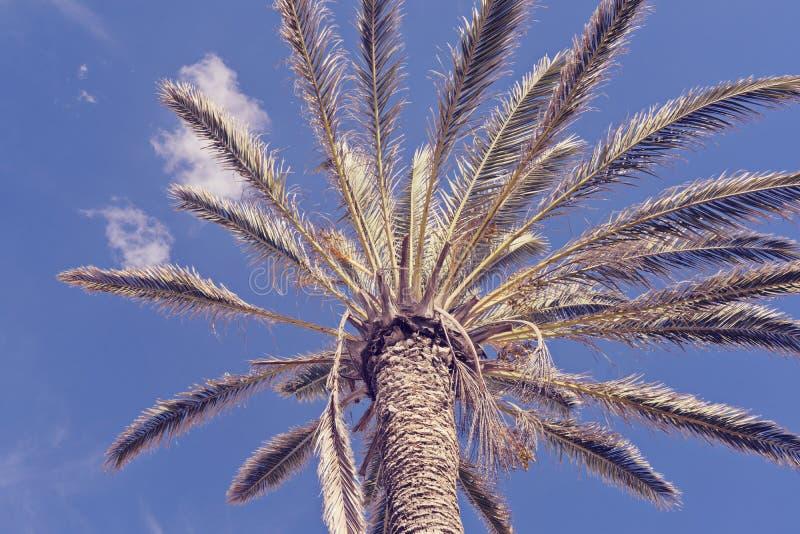 Download Vista Di Angolo Basso Della Palma Contro Cielo Blu Fotografia Stock - Immagine di coconut, hosanna: 117978234