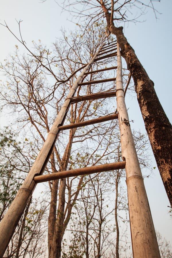 Vista di angolo basso della scala di bambù immagini stock libere da diritti