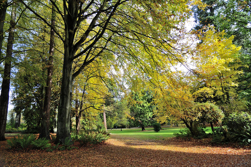 Vista di autunno del parco di Stanley fotografie stock