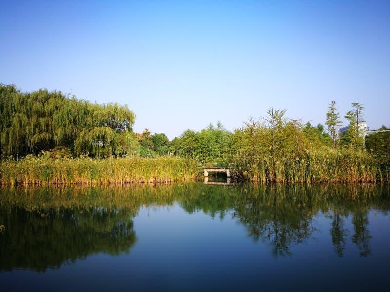 Vista di autunno nel parco concentrare immagini stock