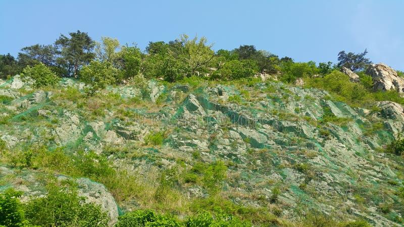 Vista di bella scena del paesaggio degli alberi e delle erbe verdi sulle grandi colline fotografia stock libera da diritti