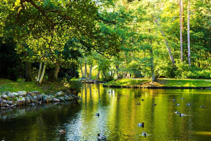 Vista di bello parco di autunno con un lago e le anatre fotografia stock