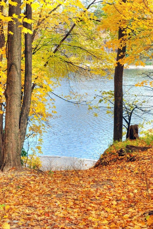 Vista di caduta di un lago attraverso gli alberi immagini stock