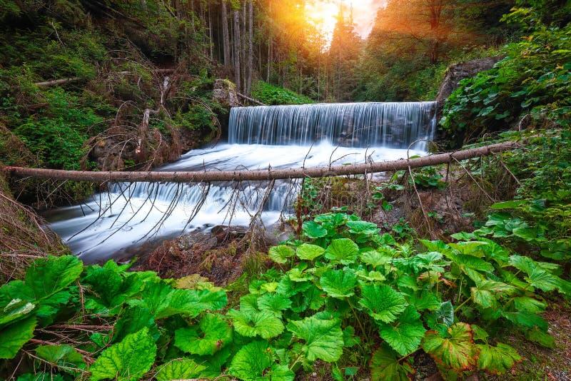 Vista di cascede vicino al velo della sposa/cascata di Valul Miresei fotografia stock