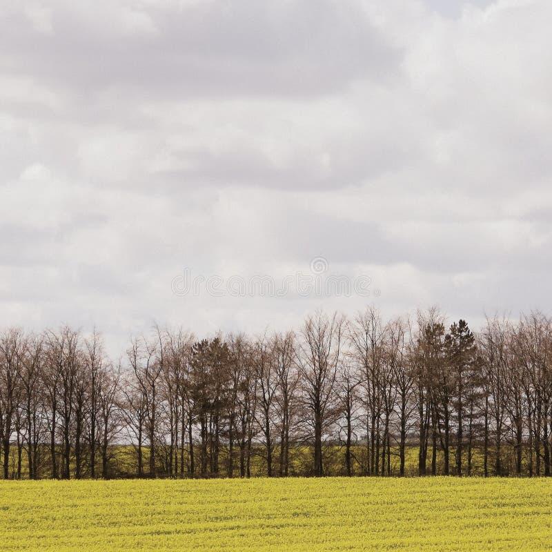 vista di estate dell'erba del campo di angolo largamente fotografie stock libere da diritti