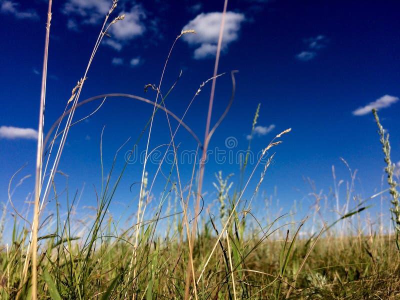 vista di estate dell'erba del campo di angolo largamente fotografia stock