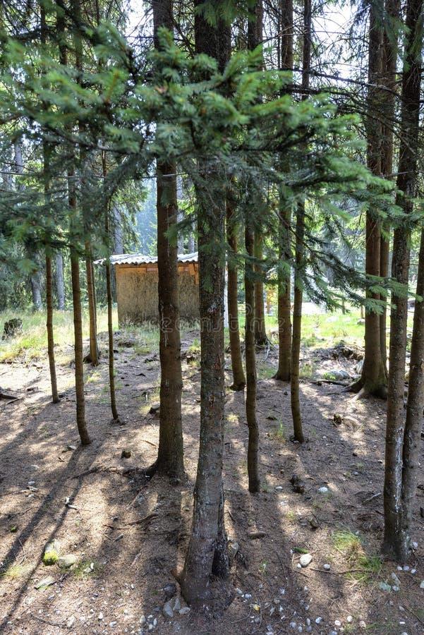 Vista di luce del giorno per inverdirsi gli alberi con le ombre fotografia stock libera da diritti