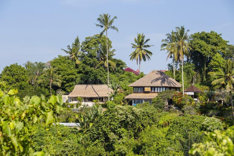 Vista di mattina degli alberi e delle case verdi del cocco in Ubud, Bali, Indonesia fotografie stock libere da diritti
