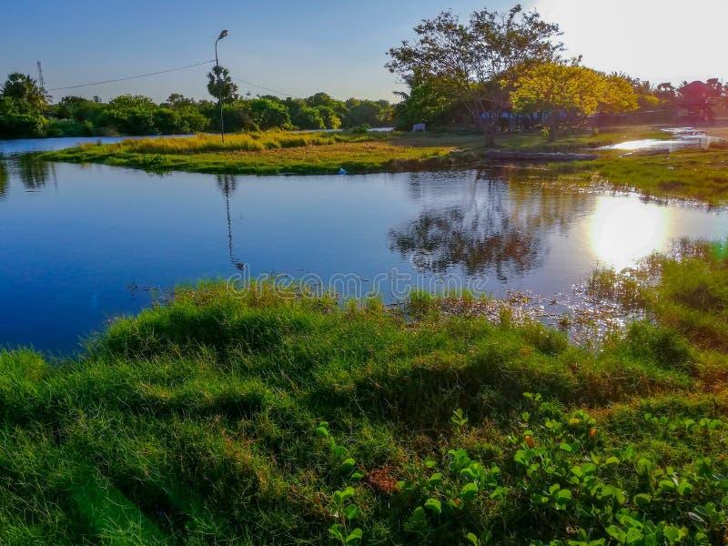 Vista di mattina sulla riva del lago fotografia stock
