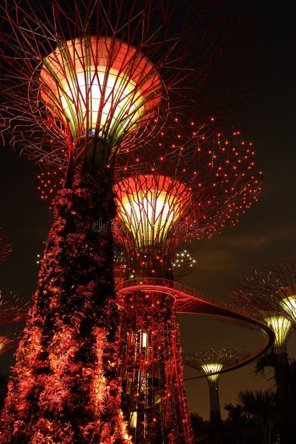 Vista di notte degli alberi eccellenti nel giardino di Singapore fotografia stock