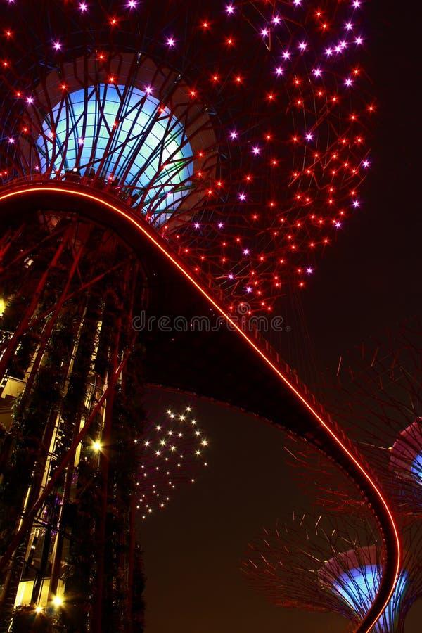Vista di notte degli alberi eccellenti nel giardino di Singapore fotografia stock libera da diritti